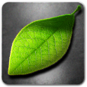 Fresh Leaves - icon