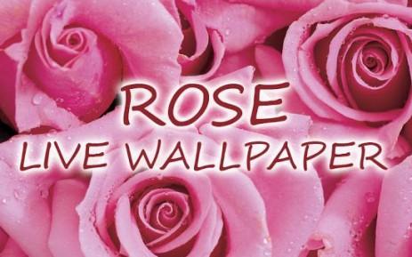 Poster Роза живые обои — Rose Live Wallpaper