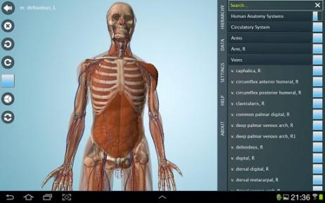 Anatomy 3D Pro - анатомия человека | Android
