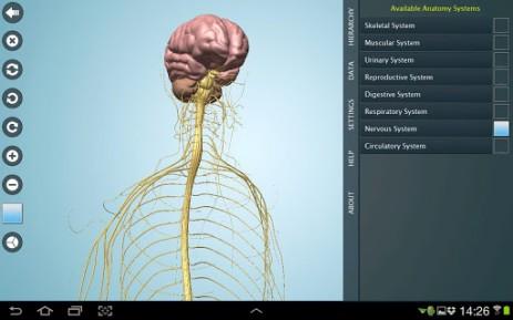 Скриншот Anatomy 3D Pro – анатомия человека