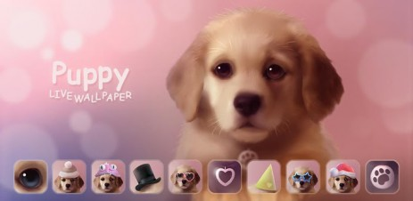 Poster Puppy Live Wallpaper