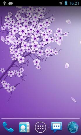 Скриншот Сакура Живые Обои