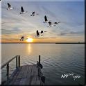 «Feeling Good Blue Lake LW — обои «причал у озера»» на Андроид