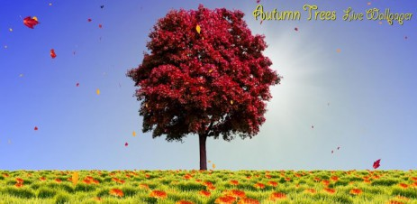 Autumn Trees - thumbnail