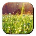 Galaxy S4 Rain n Grass LWP - icon