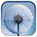Galaxy S3 Dandelion LWP - icon