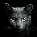 «Найди кота» на Андроид