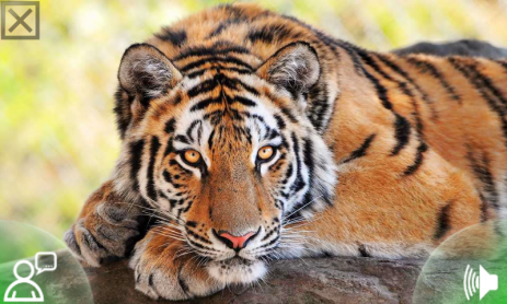 Скачать аудио звуки Животных с Названием Животного