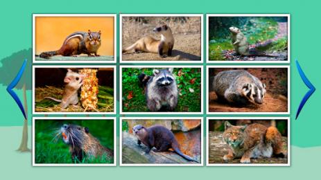Животные для детей обучение — animal world