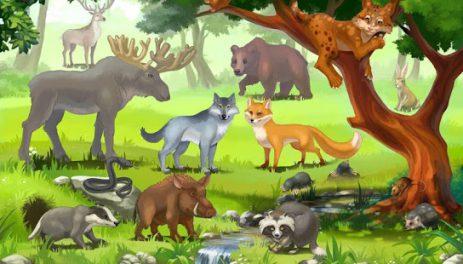 Кто живет в лесу, детская игра | Android