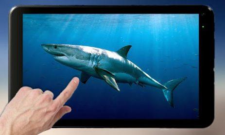 Скриншот Прикоснись к акуле