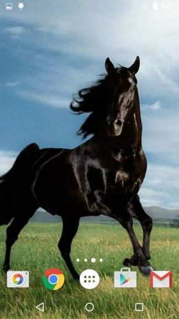 Скриншот Horses Live Wallpaper