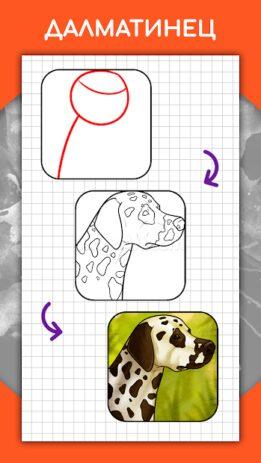 Скриншот Как рисовать животных шаг за шагом, уроки 3