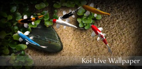 Description Koi Live Wallpaper Beautiful