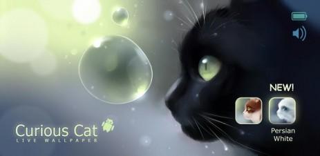 Curious Cat - любопытный кот - thumbnail