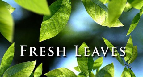 Fresh Leaves - thumbnail
